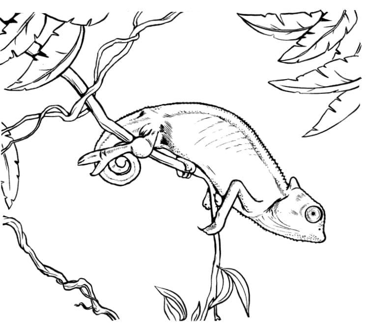 Раскраска хамелеон на ветке