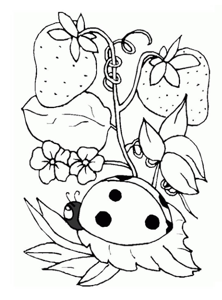 Раскраска клубника завод 3