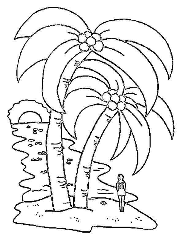 Раскраска кокосовое дерево 1