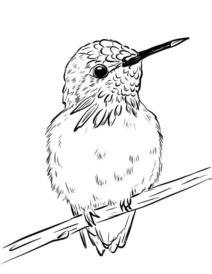 Раскраска Колибри 1