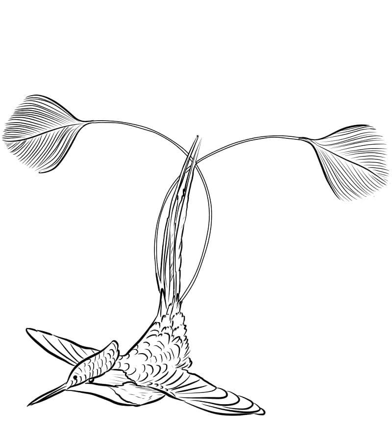 Раскраска Колибри 2