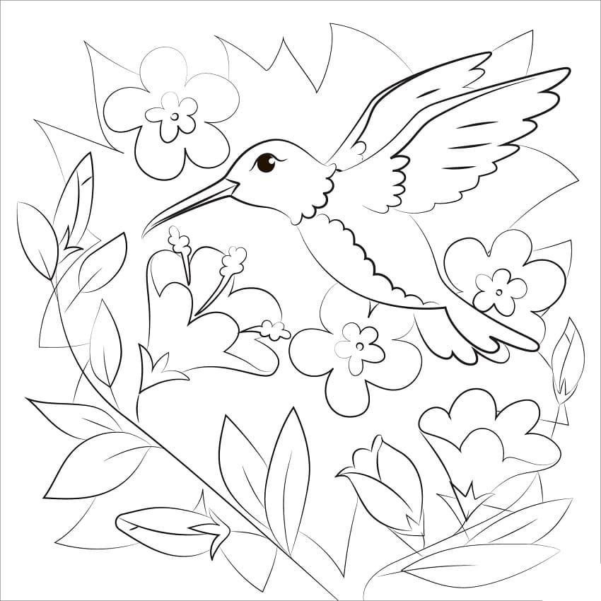 Раскраска Колибри 6