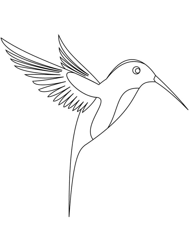 Раскраска колибри летит 1