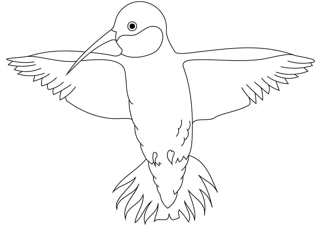 Раскраска колибри летит 4