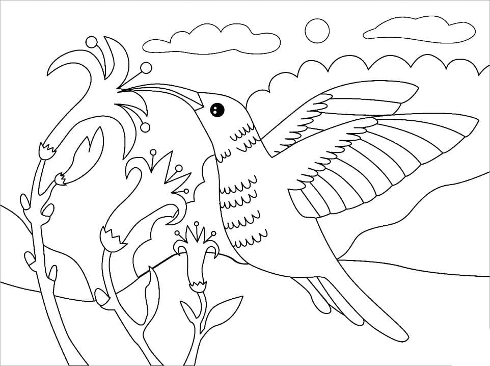 Раскраска колибри летит 5