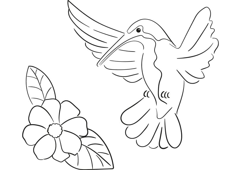 Раскраска колибри летит