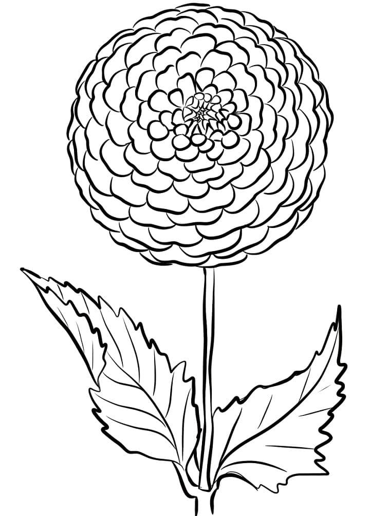 Раскраска Красивая георгина 1