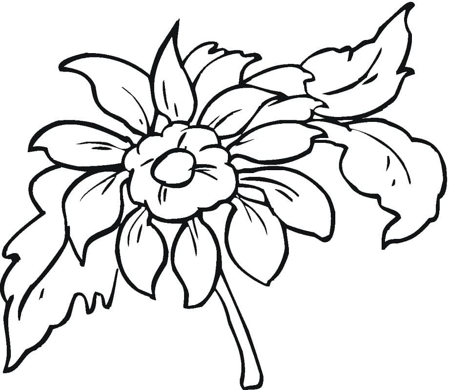 Раскраска Красивая георгина 5