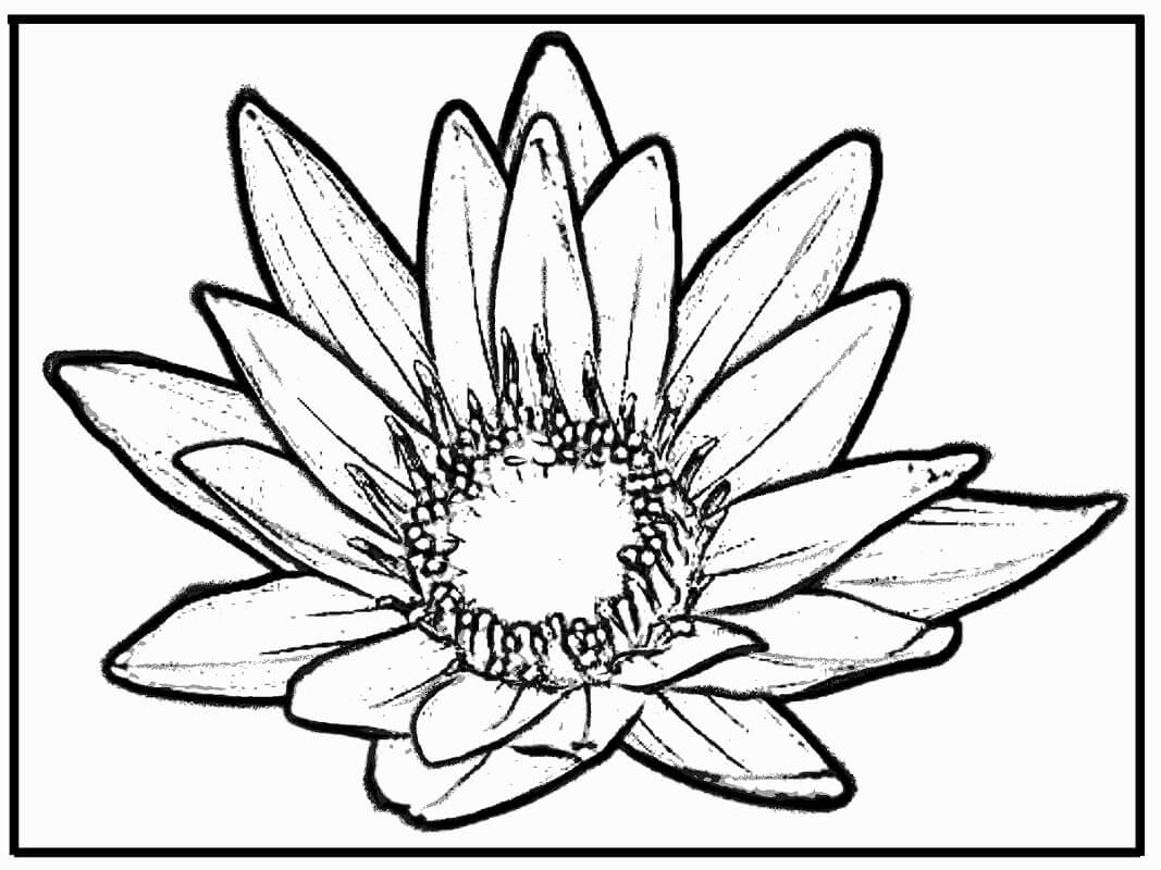 Раскраска красивая водяная лилия 1
