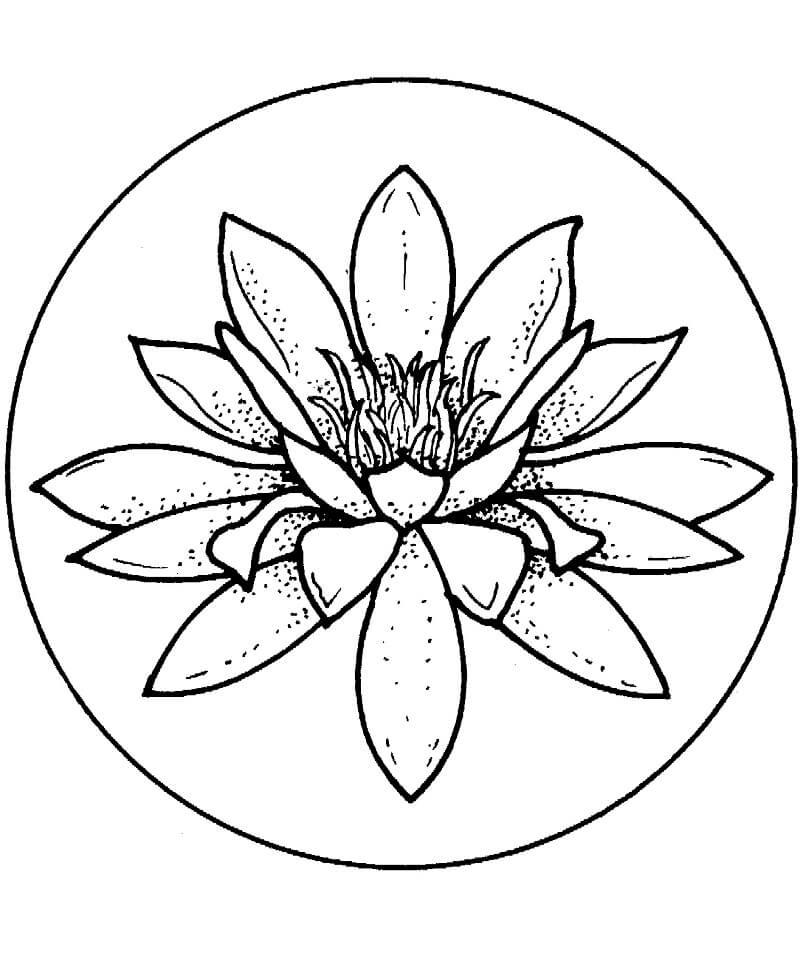 Раскраска красивая водяная лилия 4
