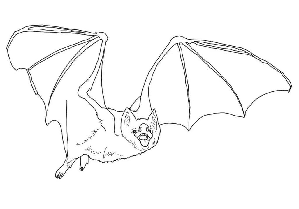 Раскраска Летучая мышь 1
