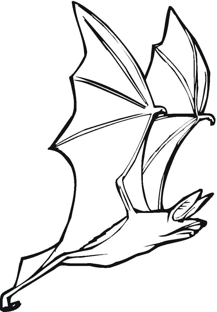 Раскраска Летучая мышь 2