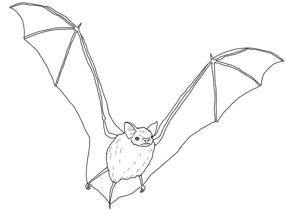 Раскраска летучая мышь летит 1