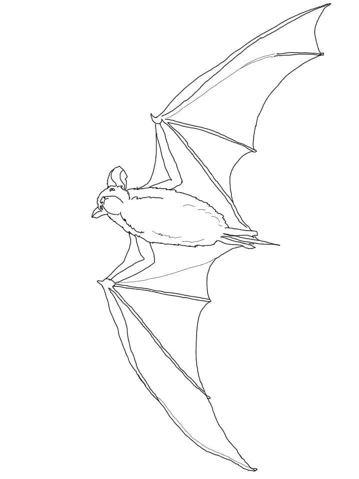 Раскраска летучая мышь летит 2