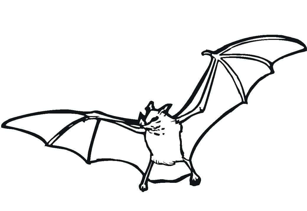 Раскраска летучая мышь летит 4