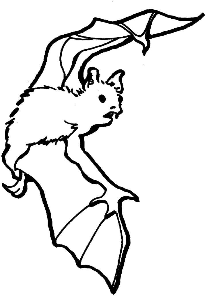 Раскраска летучая мышь летит 5