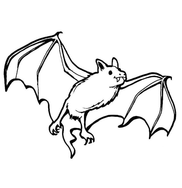 Раскраска Летучая мышь милая 4