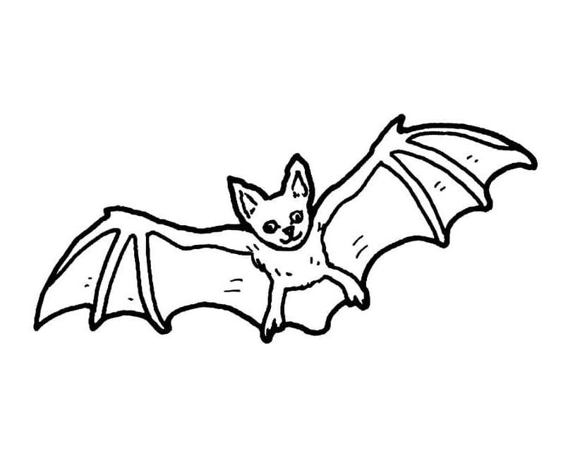 Раскраска Летучая мышь милая 5