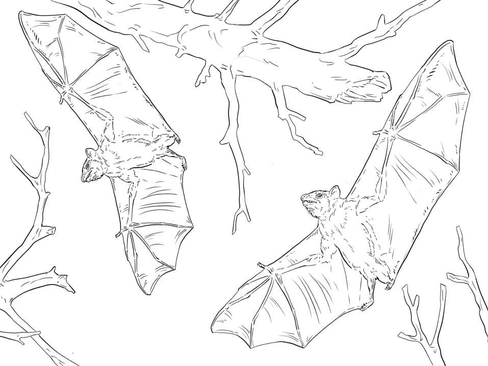 Раскраска Летучие мыши 2
