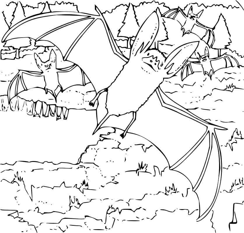 Раскраска Летучие мыши