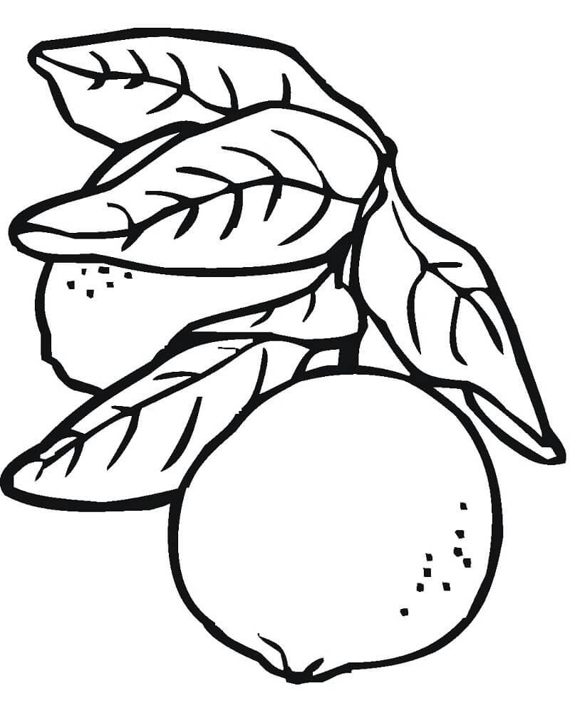 Раскраска лимон 1