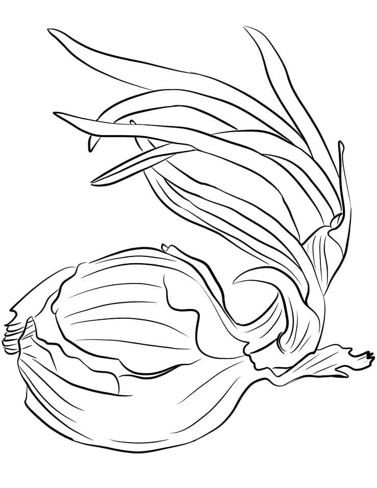 Раскраска Лук 1