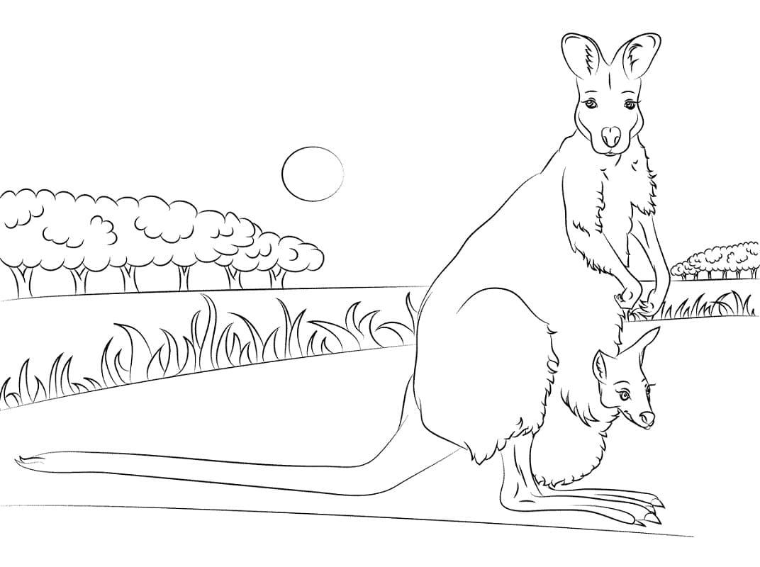 Раскраска мать и ребенок кенгуру 2