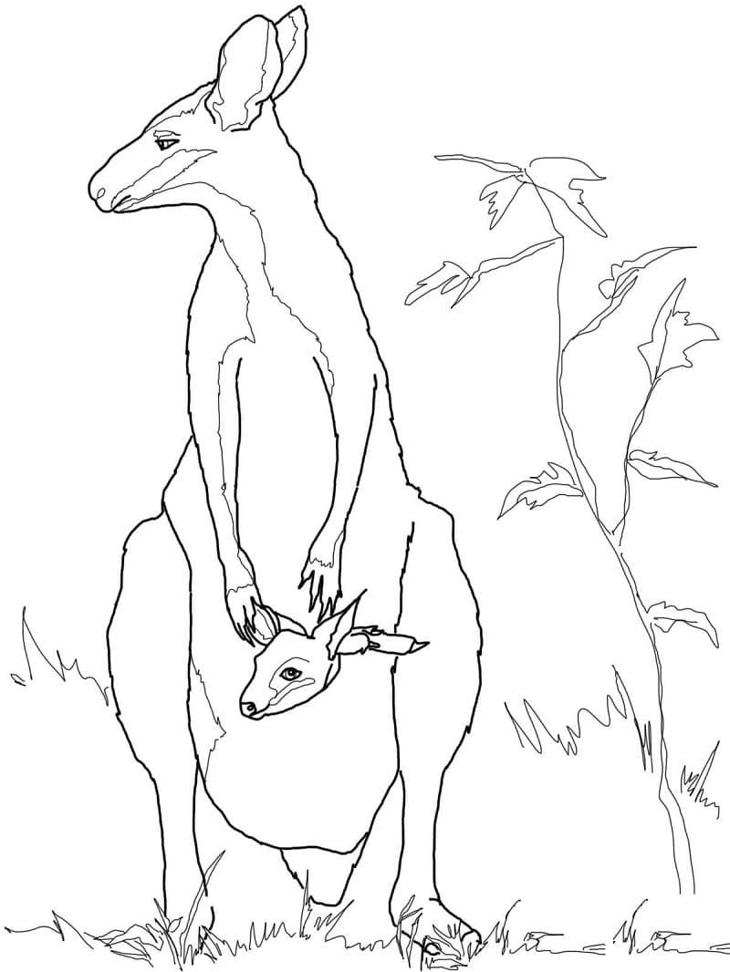 Раскраска мать и ребенок кенгуру 5