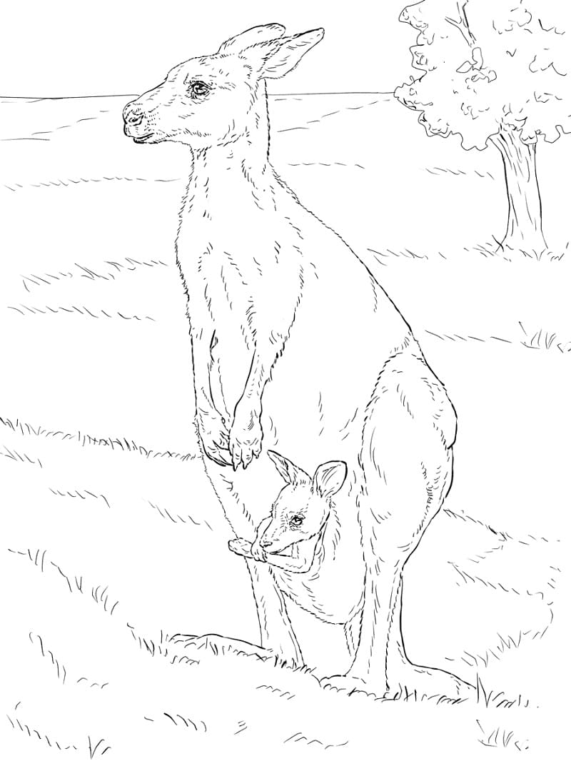 Раскраска мать и ребенок кенгуру