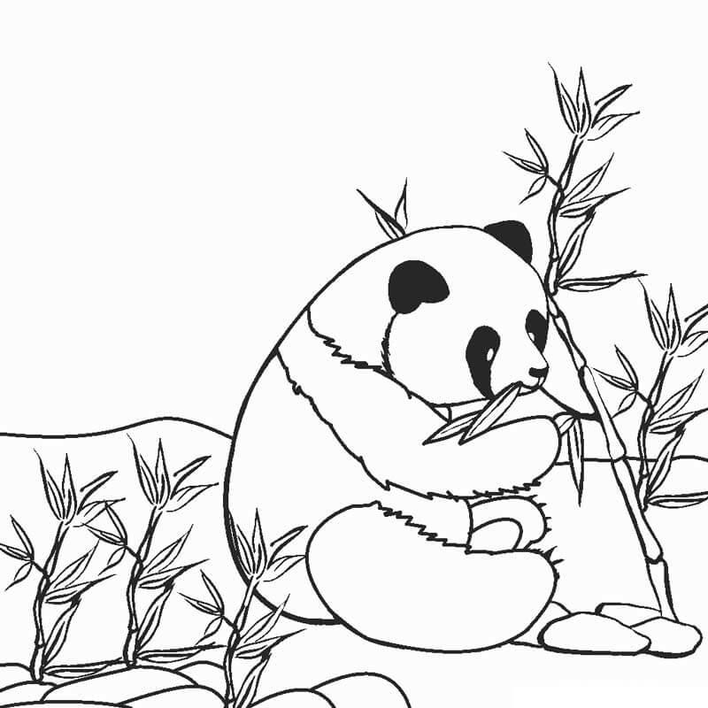 Раскраска Медведь панда 1