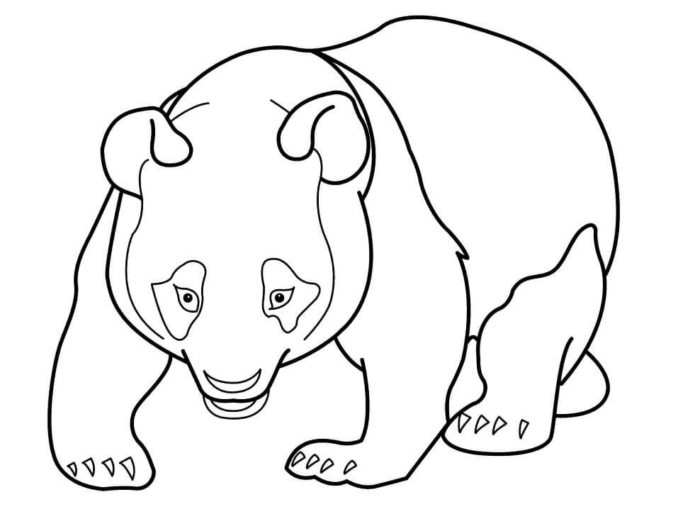 Раскраска Медведь панда 2