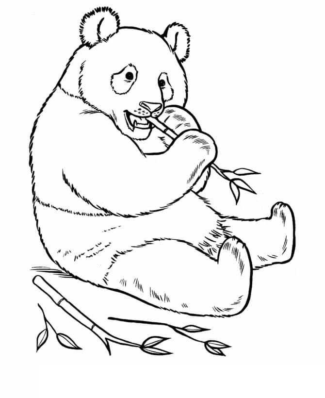 Раскраска Раскраски Большая панда