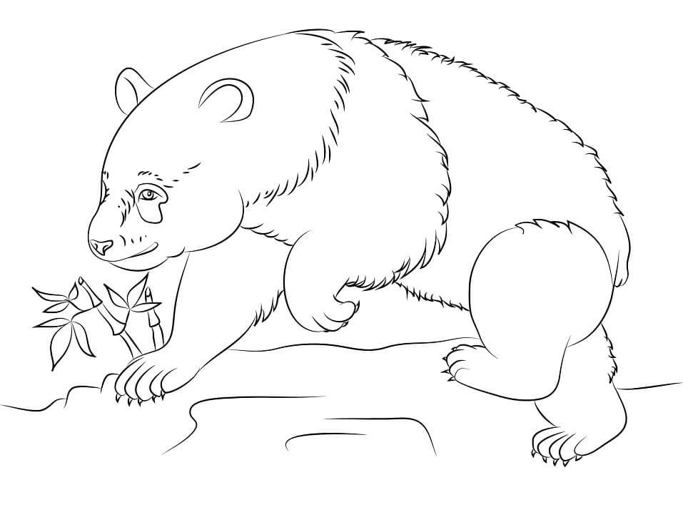 Раскраска Медведь панда 6