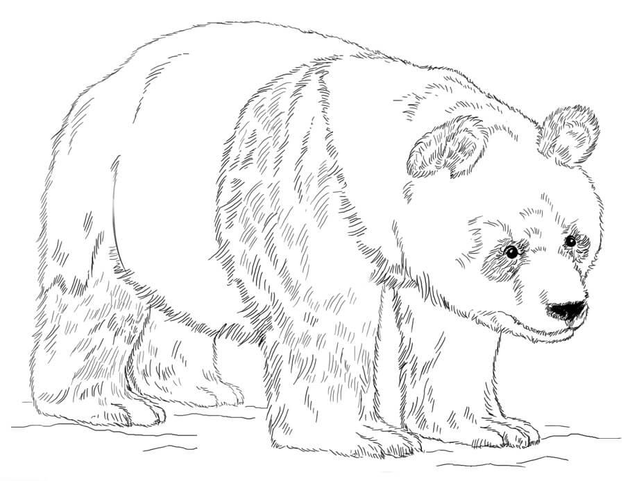 Раскраска Медведь панда 7