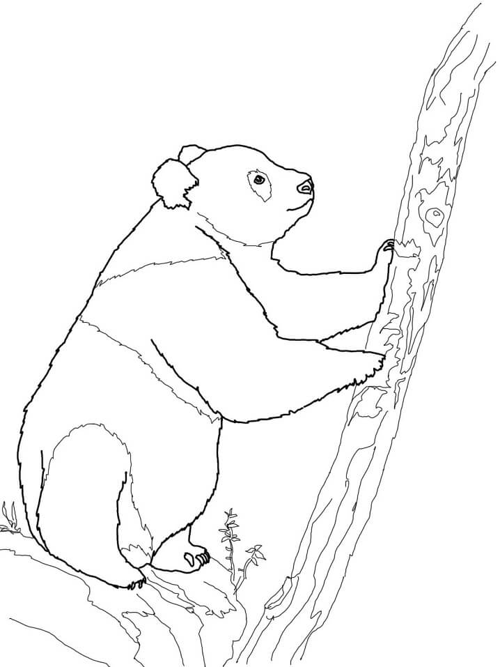 Раскраска Медведь панда 8