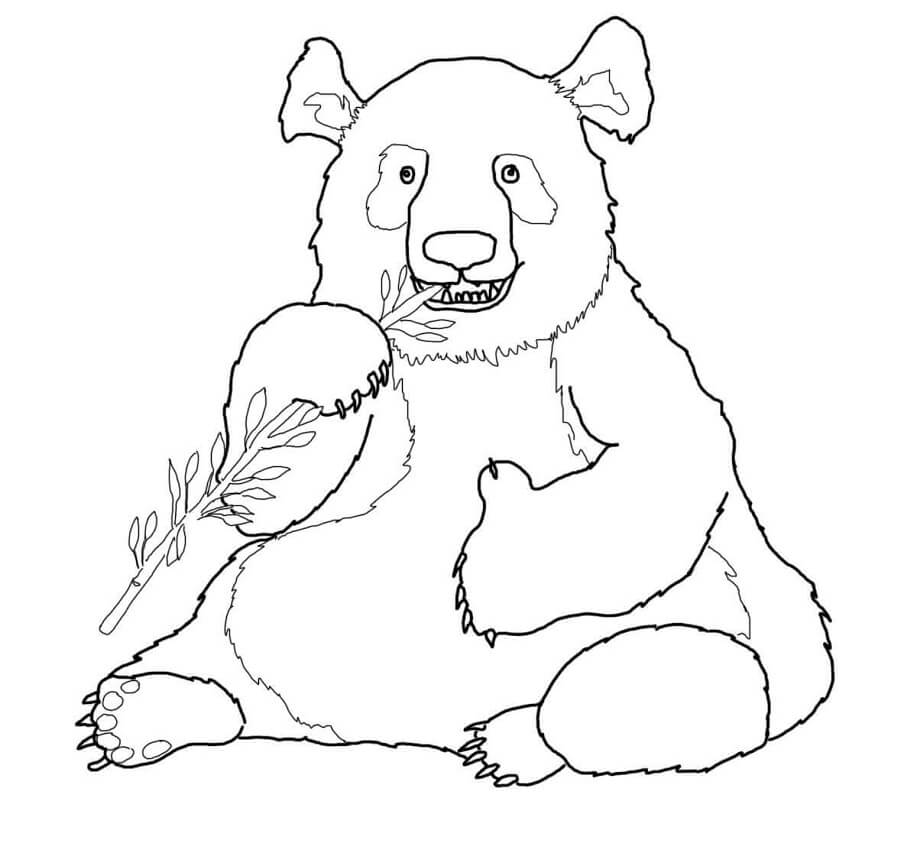 Раскраска Медведь панда 9