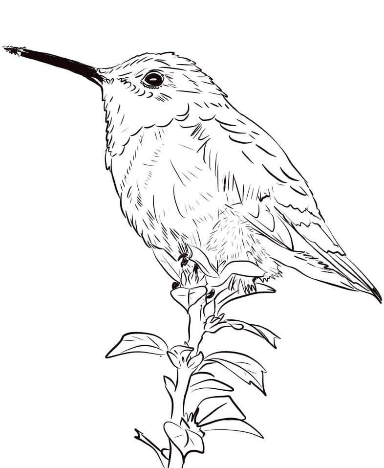 Раскраска милый колибри 1