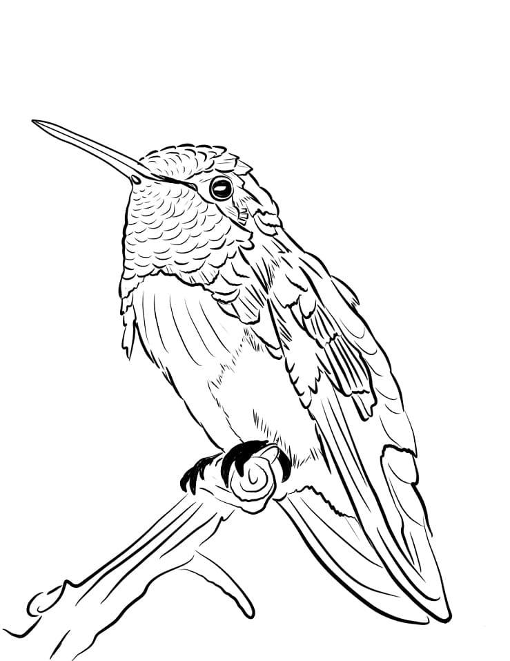 Раскраска милый колибри 4