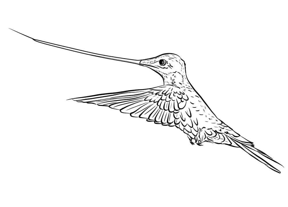 Раскраска милый колибри 5