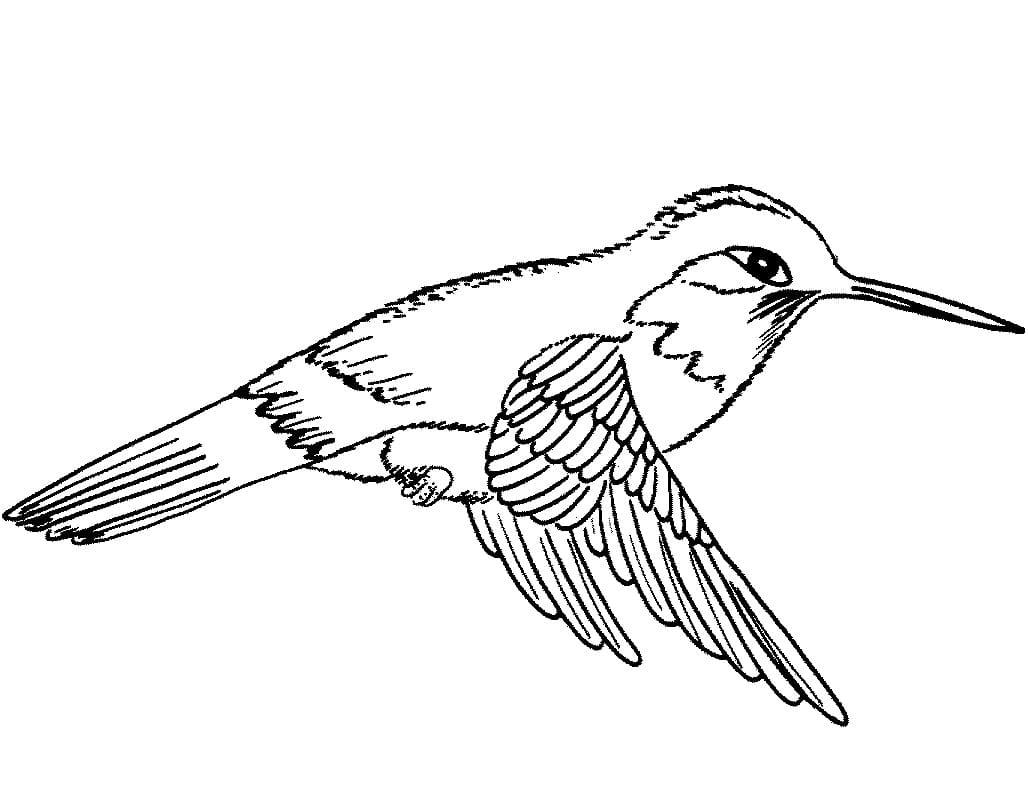 Раскраска милый колибри