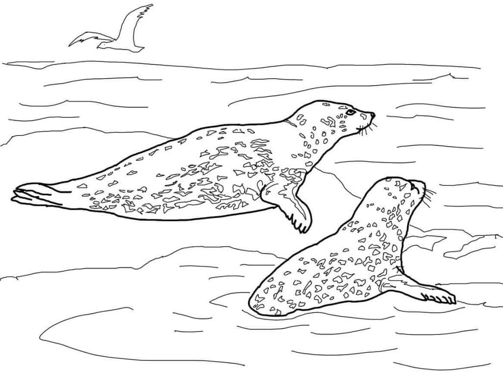 Раскраска Морские леопарды