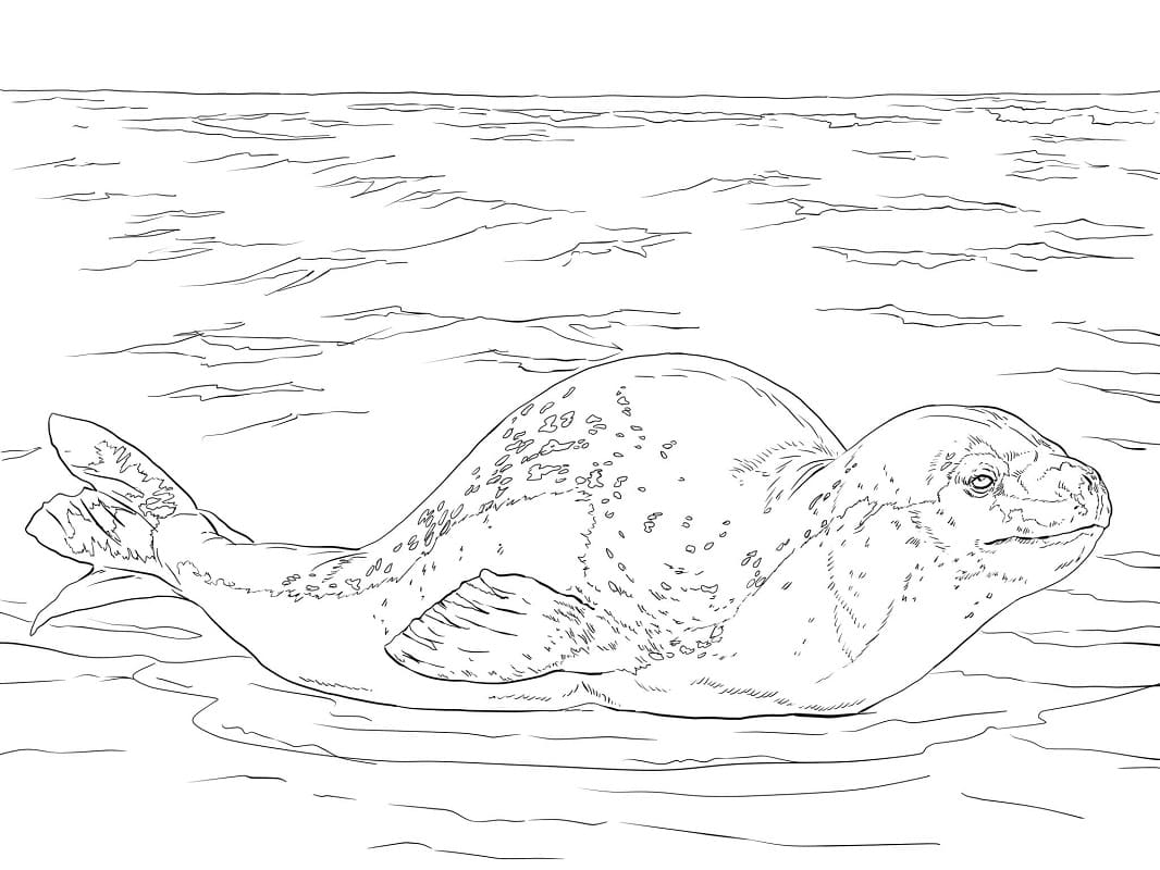 Раскраска Морской леопард
