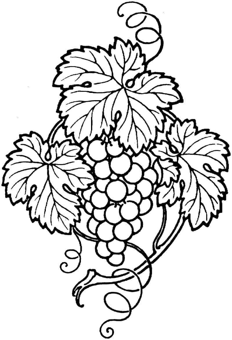 Раскраска нормальный виноград 1