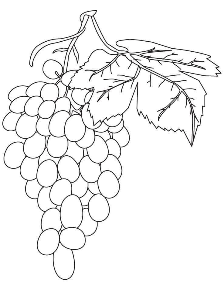 Раскраска нормальный виноград 2