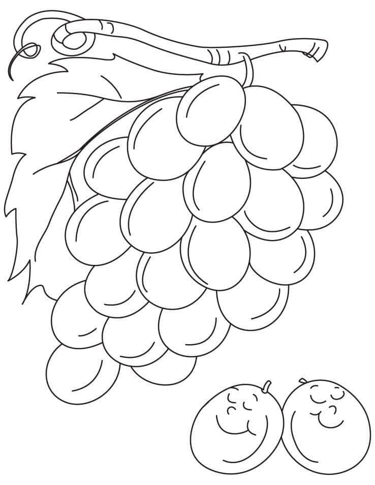 Раскраска нормальный виноград 3