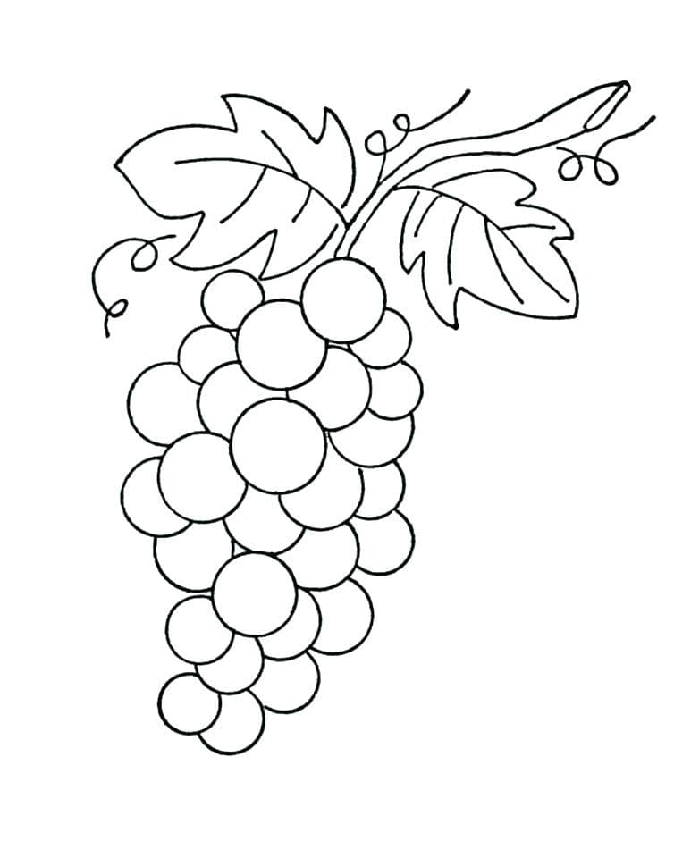 Раскраска нормальный виноград 5