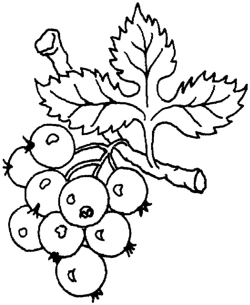 Раскраска нормальный виноград 6