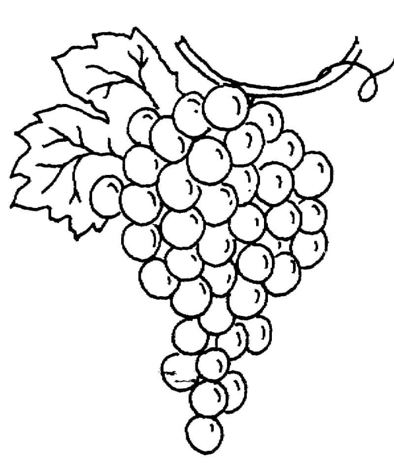 Раскраска нормальный виноград