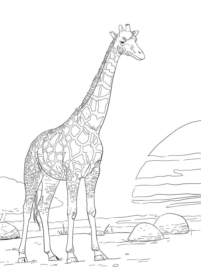 Раскраска нормальный жираф 1