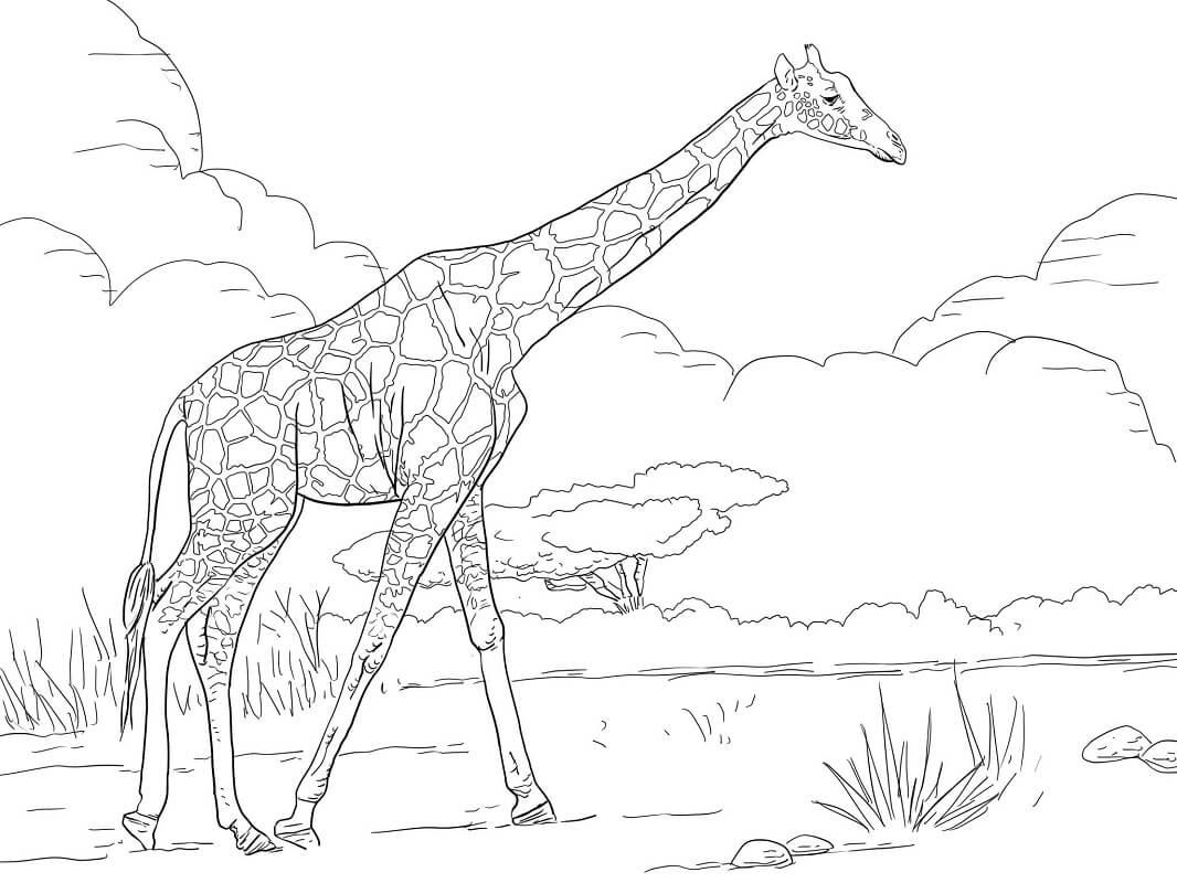 Раскраска нормальный жираф 2